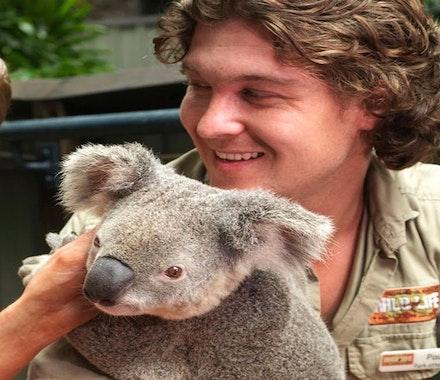 Hold the koalas at WILD LIFE Hamilton Island - Hamilton Island family packages