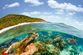 Encounter marine life snorkeling the Great Barrier Reef - Hamilton Island vacation